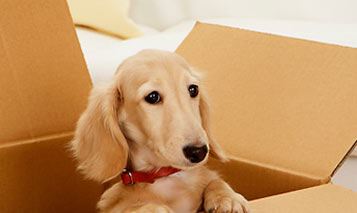 Pets Moving Tips